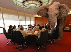 elephant-in-the-room250